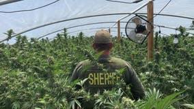 32 people arrested, over 23,000 marijuana plants seized during operation in San Bernardino County