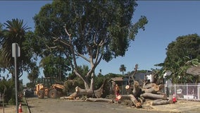 Residents say trail of destruction left by Monday's strong winds in South LA could have been avoided