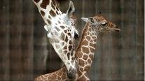 San Francisco Zoo to reopen Monday