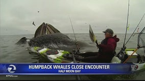 AMAZING VIDEO: Once in a lifetime whale encounter