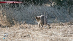Feral cats vs. birds on Google's Mountain View campus