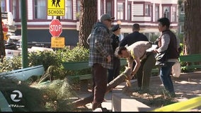 Tree limb falls, critically injures woman in SF North Beach playground