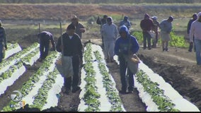 Will immigration order impact farm workers?