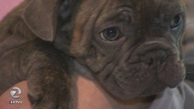 Woman duped by dognapper; puppy snatched from her hands