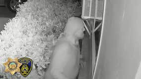 Man caught on video peering into child's bedroom window in Campbell