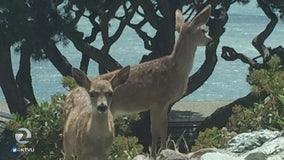 Man sick of deer eating landscaping, kills them with pellet gun
