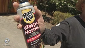 Wasps, yellow jackets breeding more than usual due to extreme weather