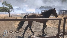 4 horses killed in Morgan Hill wildfire
