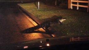 Gator stops traffic, because Florida