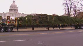 US Capitol Christmas Tree arrives in nation's capital
