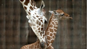 San Francisco Zoo to reopen Monday