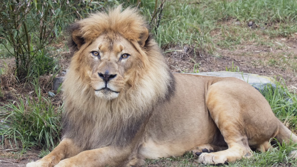 Financially struggling zoos could be latest pandemic victims