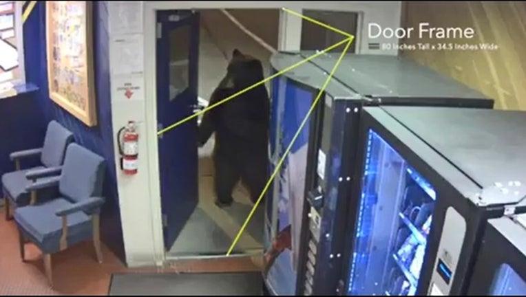 9cee8321-Bear in office_1543176336551.PNG.jpg
