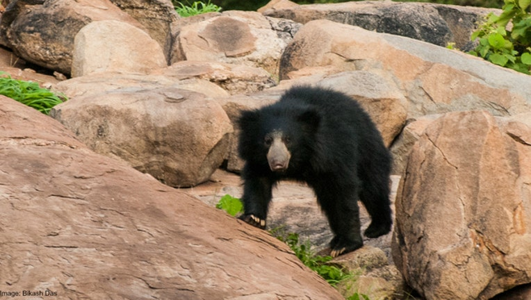 4ba11b20-Bear stock photo by Bikash Das via Flickr-404023
