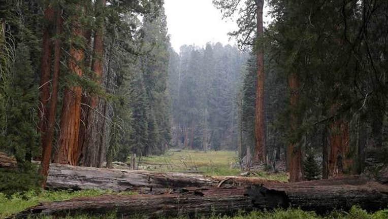 eec8487e-California-Drought-Sequoias_1443070207734.jpg