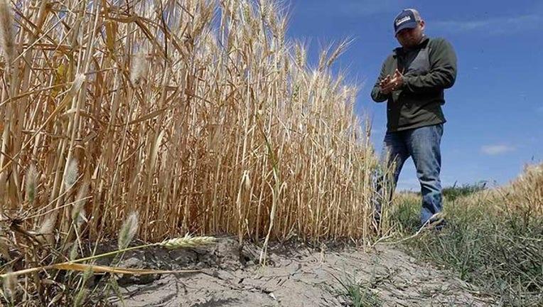 California Drought Water Cuts_1438121023917