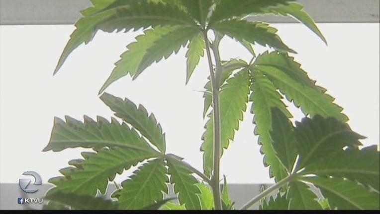 Cities_look_to_accommodate_marijuana_if__0_20161025004812