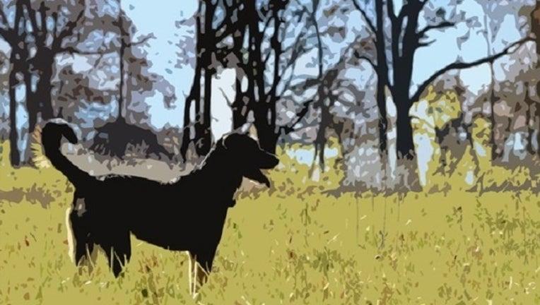 91fe1f61-Dog Stock_1497550990111-401096.jpg