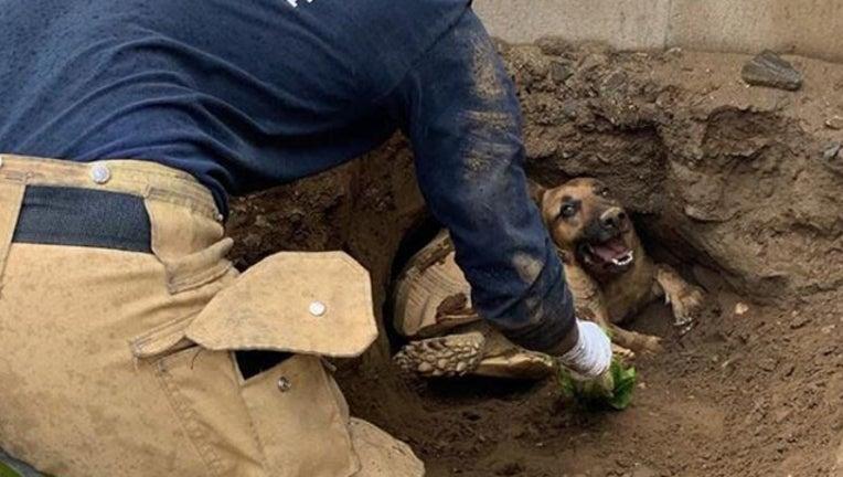 45a0f176-Fontana dog and turtle rescue_1550881228262.jpg-407068.jpg