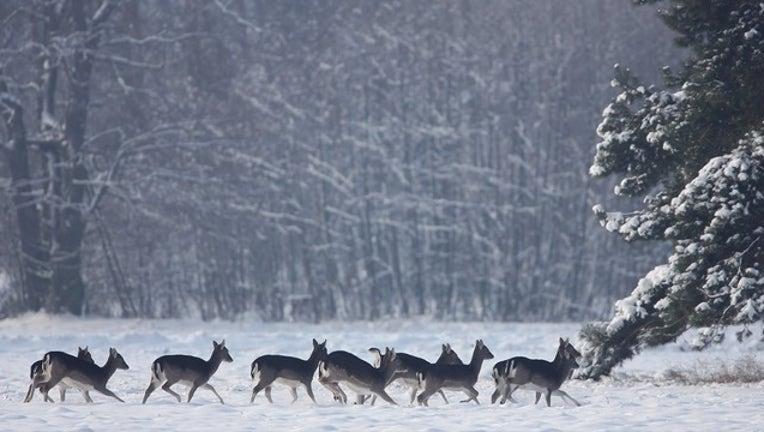 fe3fb7c7-GETTY_frozen deer_012019_1548002308491.png-402429.jpg