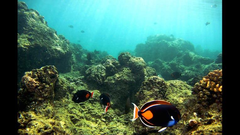 bf901e09-Getty Coral reefs