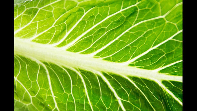 c61e92ec-Romaine lettuce Getty