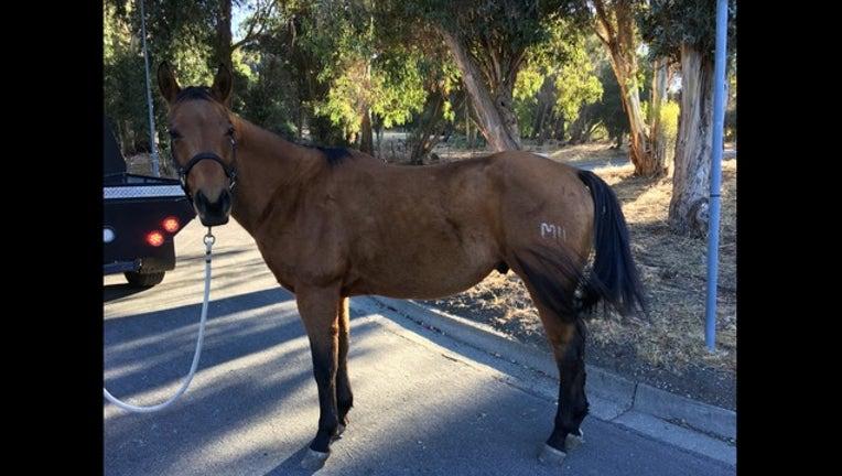 7c66e637-KTVU_Horse on the loose_110218