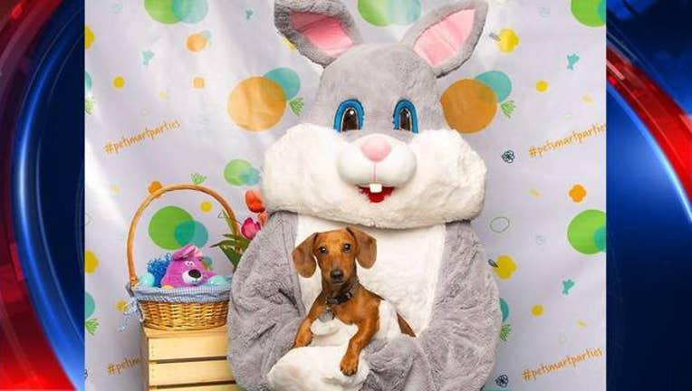 ec4d409b-KSAZ PetSmart Easter Photos_1555167643819.jpg-408200.jpg