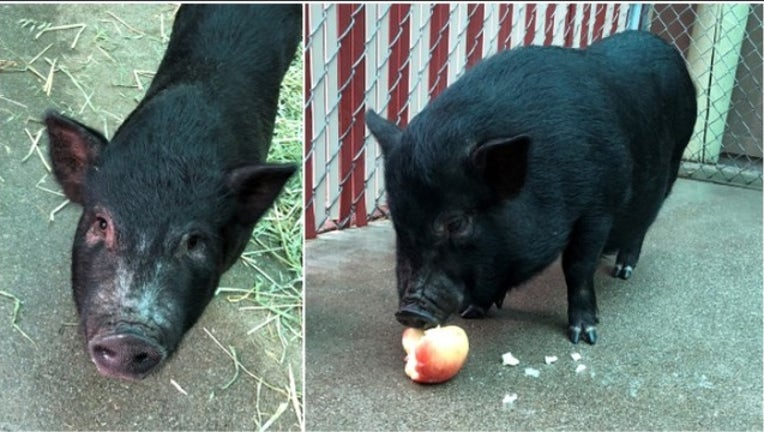 18f706aa-Piggy smalls split_1543438345413.PNG.jpg