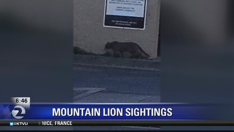 9b50f6b1-SAN_MATEO_COUNTY__Mountain_lion_sighting_0_20160718170854