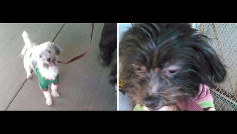 ecd427b7-Turpin_dogs_new_1516640340360.JPG