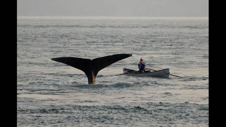 155f6acd-Whale_sighting_0_20170905195933