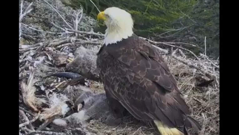 441c75b4-bald eagle earthquake_1522972496567.PNG.jpg