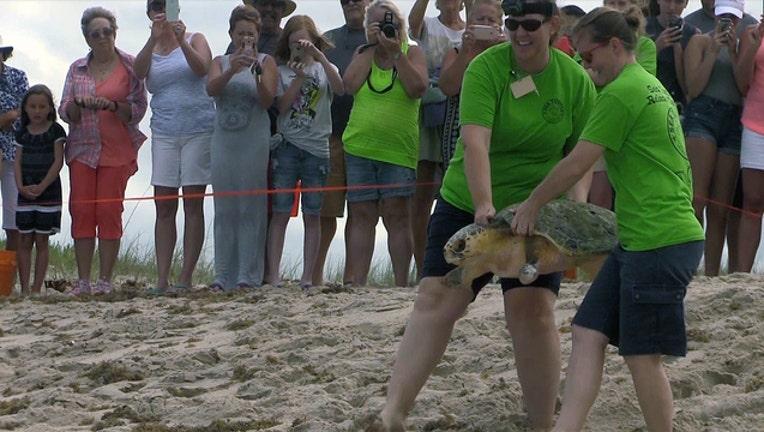 76b4d835-brevard-zoo-turtle-rehab_1492116570355-402429.jpg