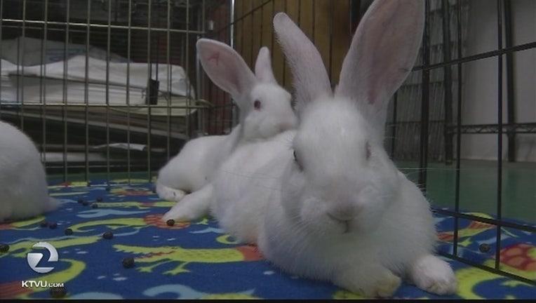 ad4cd0ff-bunnies_1490675482312.jpg