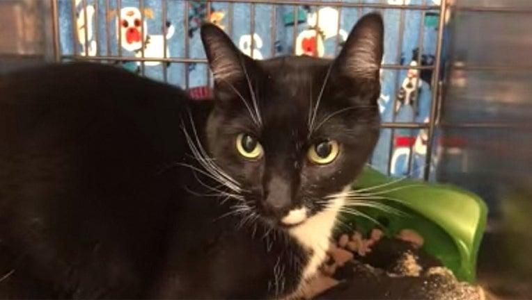 5e821812-cat-Idaho-Humane-Society_1564260017488-402429.jpg