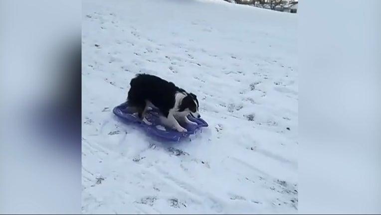 d8c3da5d-dog sleds_1515104770942.PNG-407068.jpg