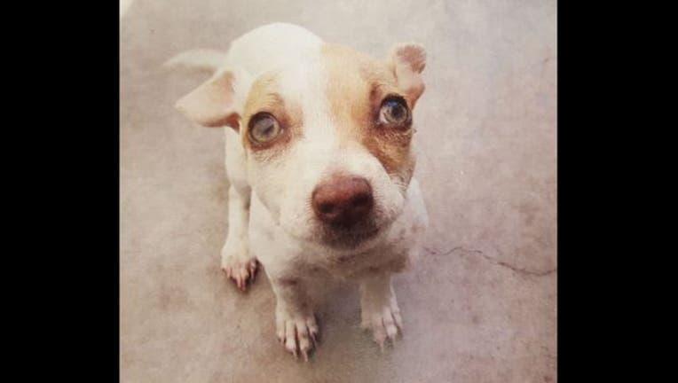 8de8725a-dogs_drugs_1464035325927.jpg
