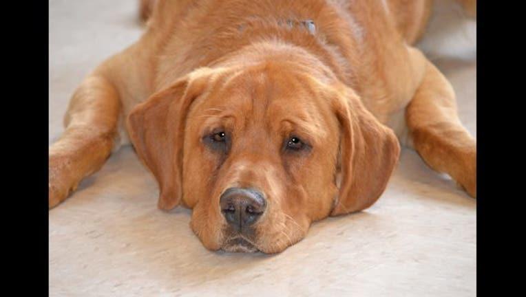 af41453c-eastwood the dog_1493756873145.jpg