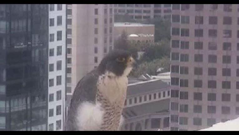 2582edac-falcons_1461682904000.JPG