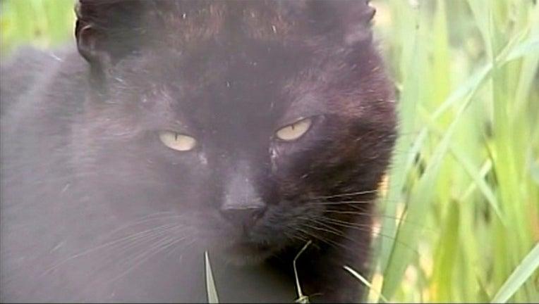467e384f-feral cat_1556536841560.jpg-401385.jpg