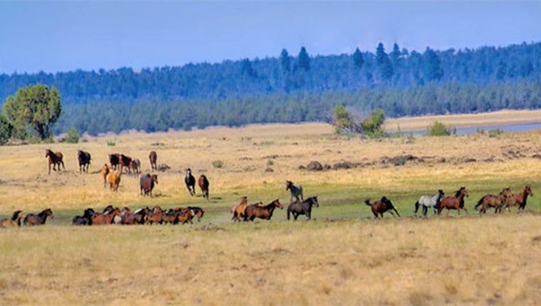 8d4c6af3-horses_1542144813213.jpg
