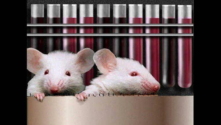 57b6945e-mice_1495512528468.jpg