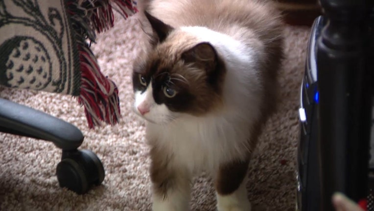b6c9efb5-missing-cat_1545953695208-402429.jpg