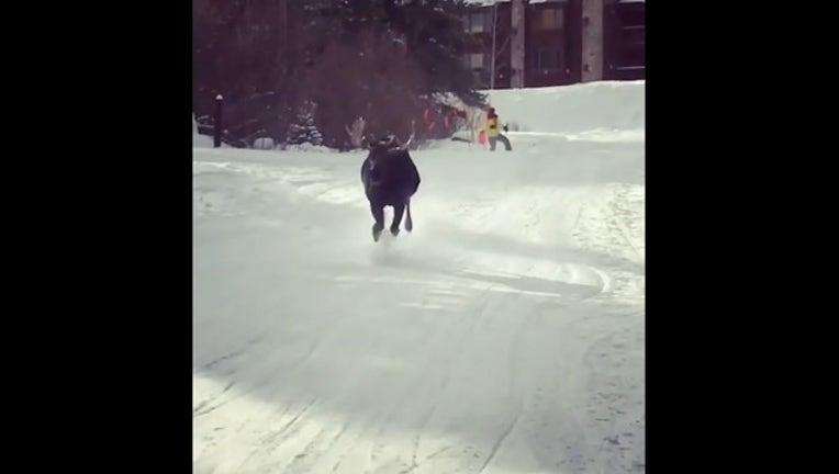 cae76700-moose run_1548190283419.PNG.jpg