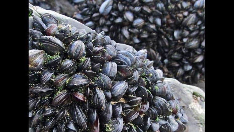 a49ae04f-mussel_1520482512990.jpg