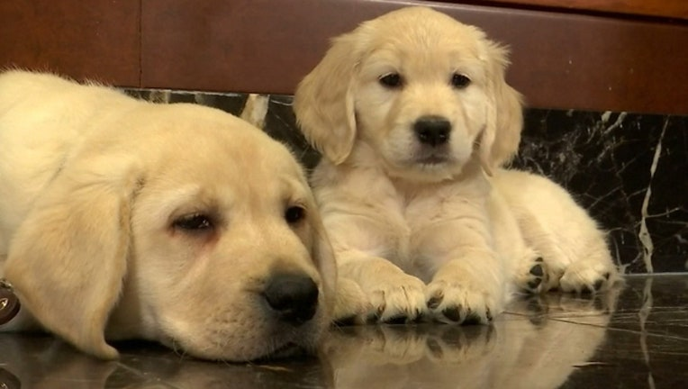 fd6cce08-orlando-pet-friendly-dogs_1533858968009-402429.jpg