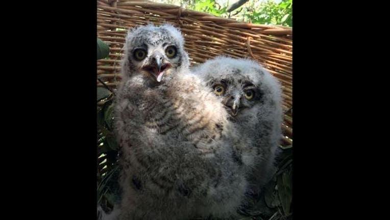 dce14c23-owls_1463076087716.jpg