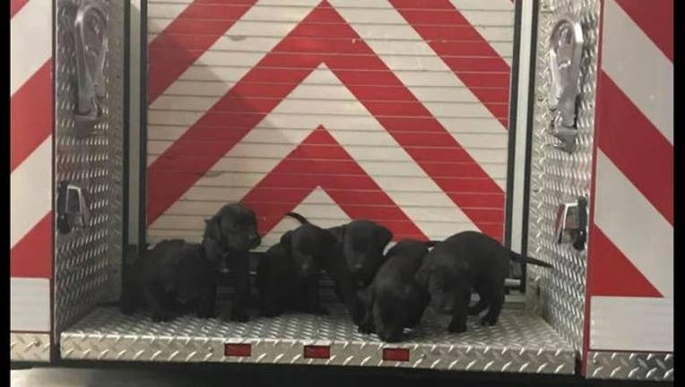 30fbee95-puppies_new_1544904958795.JPG