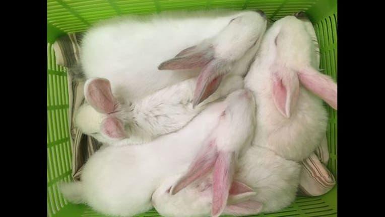 a9940e77-rabbits_1485639480652.jpg